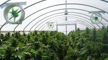 Will Aurora Cannabis Stock Go to $0?