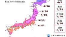 日本賞櫻最前線 櫻花最新預測情報