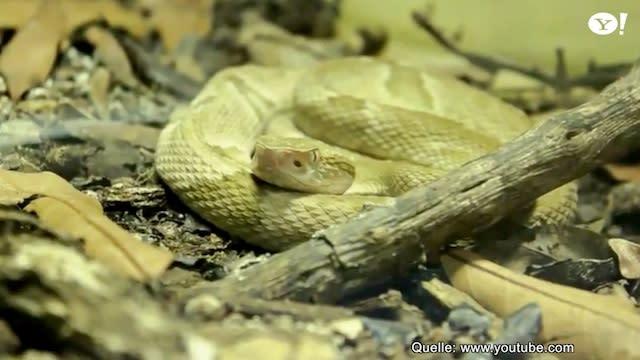 Schlangen Insel