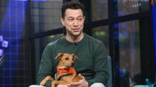 "Dan Schachner On All The Puppies That Will Be In Animal Planet's ""Puppy Bowl XVI"""