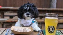 10 Restaurants Where Dogs Are Served Steak, Beer, and Ice Cream