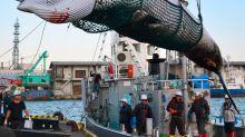 Japão decide retomar caça de baleias para fins comerciais