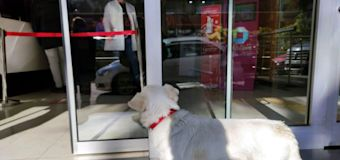 Loyal dog Boncuk spends days waiting for owner outside Turkish hospital
