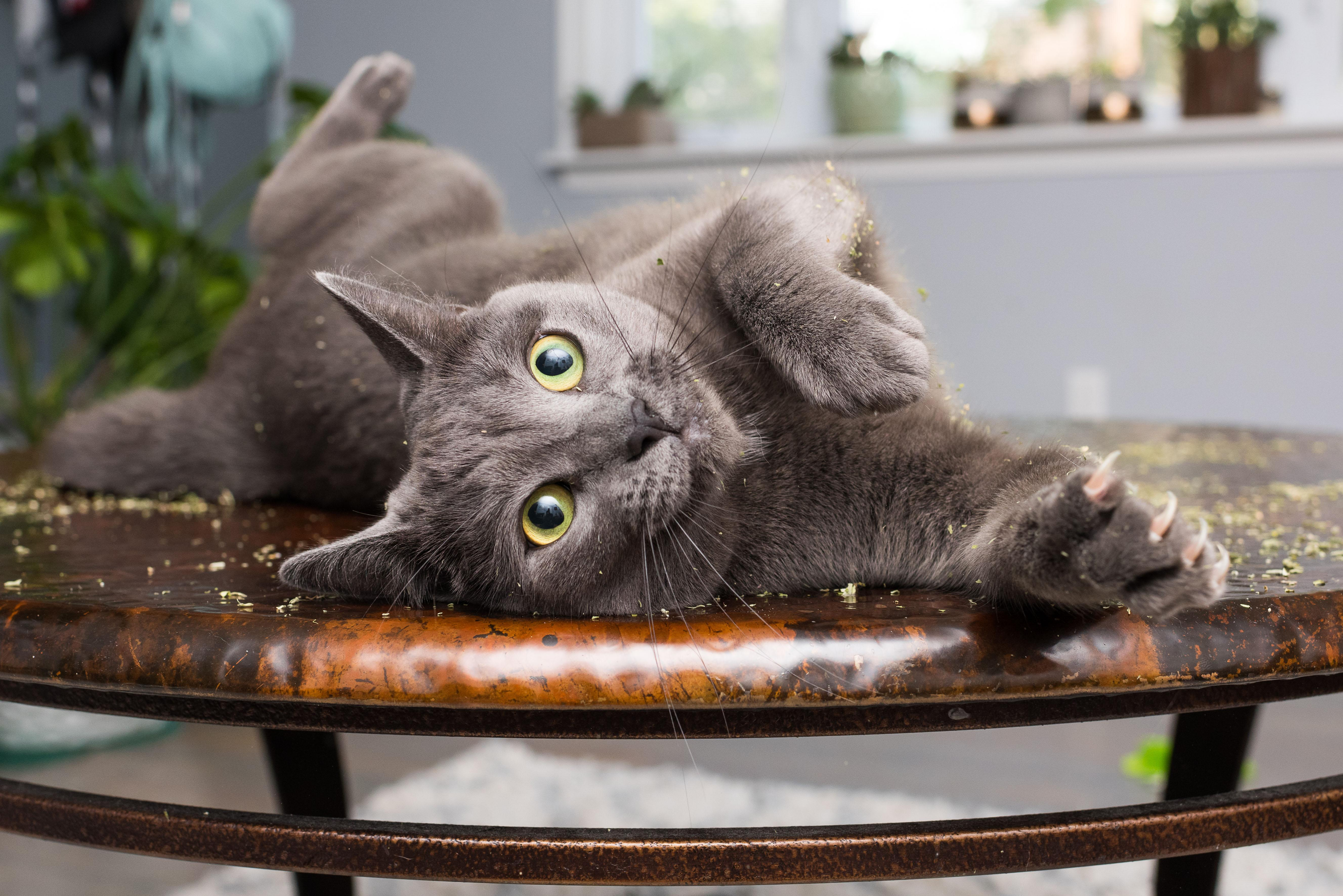 """<p>Now a full-time feline photographer, Andrew Marttila, 32, from Washington, D.C., spent the past few months compiling photos for a book, """"Cats on Catnip."""" (Photo: Andrew Marttila/Caters News) </p>"""