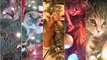 Cats Declare War On Christmas In Hilarious Supercut Of Feline Tree Takedowns