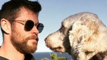 Cute Photos of Chris and Liam Hemsworth With Dogs