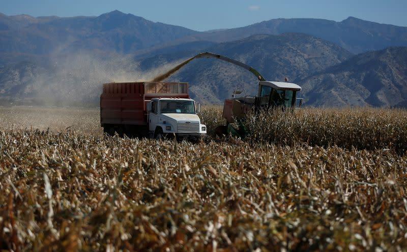 U.S. bread, donut makers urge Biden to roll back biofuel requirements