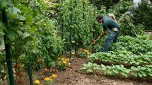 Confinement: les plants potagers finalement considérés comme des produits de première nécessité