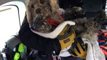Winter rescue: Stranded dog winched to safety on helicopter