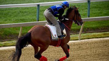 Horse runs Preakness after bucking jockey