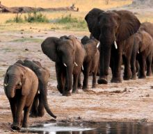 Zimbabwe: Elephants die from 'bacterial disease'