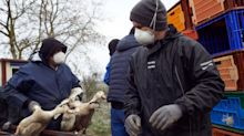 'Tip of the iceberg': World's first 'human infection' of bird flu strain reported