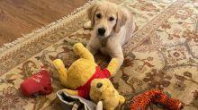US-China: Pompeo dog photo has netizens asking if US is toying with China