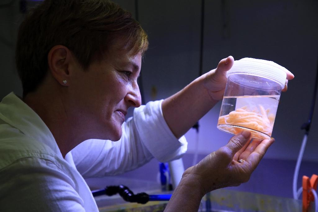 Marine chemical ecologist Dr. Cherie Motti, who is leading the breeding program of the Pacific triton sea snail, or giant triton, is seen at a research facility near Townsville in Queensland (AFP Photo/Handout)