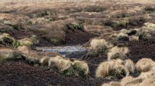 Climate change: UK peat emissions could cancel forest benefits