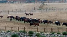 New pen may allow sale of horses for slaughter