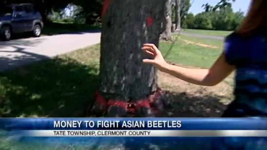 Could federal funds hurt fight against Asian beetles?