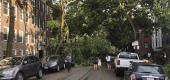 A downed tree blocks a roadway in Chicago's Lakeview neighborhood. (AP)