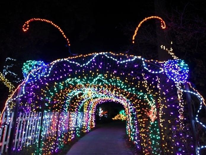 Garden of Lights at Brookside Gardens is canceled this year due to COVID-19, according to Montgomery Parks.