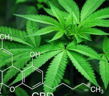Aurora Cannabis Stock Continues to Gather Steam