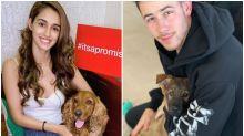 Yearender 2019: Priyanka-Nick's Gino to Disha Patani's Keety, Celebrity Pets Who Stole Limelight