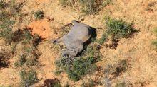 Botswana gets test back on elephant deaths