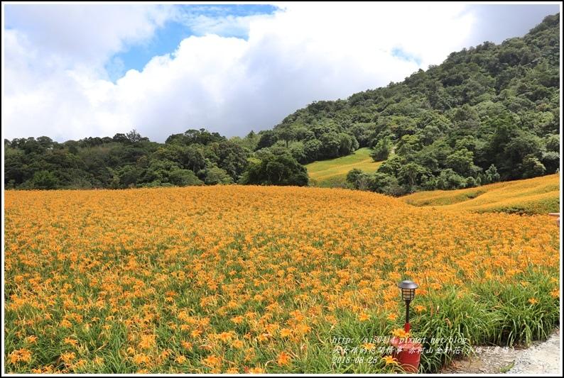 赤柯山金針花(小瑞士農場)-2018-08-24.jpg