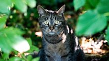 Why a small town is planning to ban cats