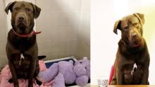 Solía ser un 'buen perro', ahora es el principal sospechoso de un 'crimen'