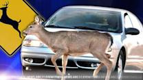November peak month for deer collisions