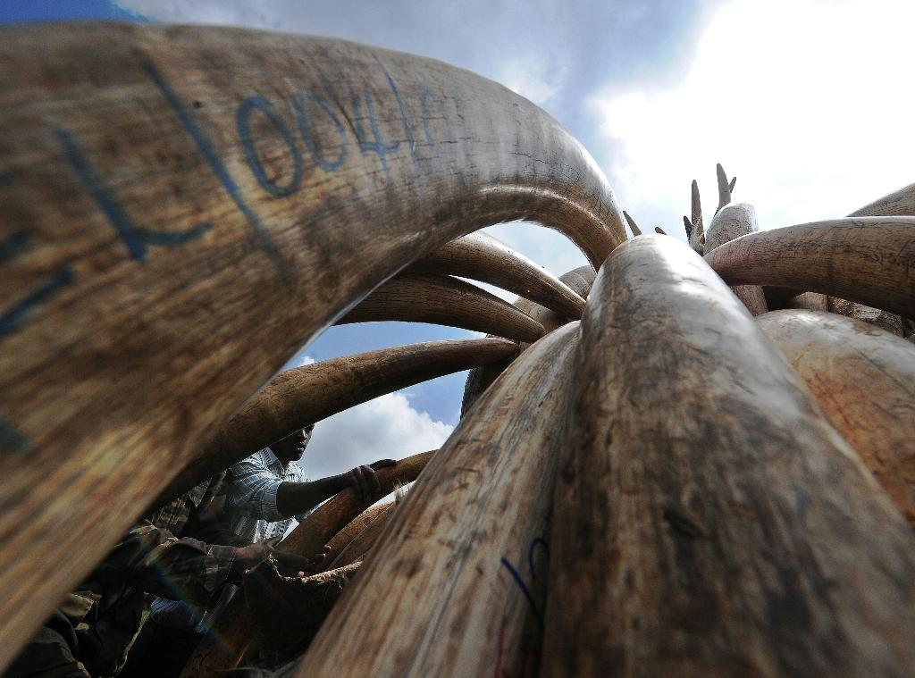 The United States finalizes a near-total ban on the trade of African elephant ivory (AFP Photo/Tony Karumba)