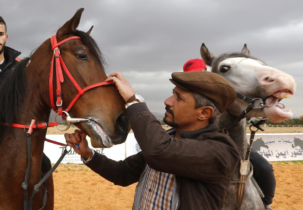 """Horse trainer Jihad Ghazal (R) says horses are very sensitive and that """"the sounds they hear greatly affect them"""" (AFP Photo/LOUAI BESHARA)"""