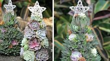 These Succulent Christmas Trees Will Add A Festive Touch To Your Holiday Decor