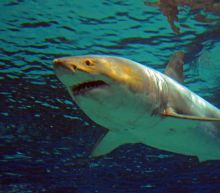 'It was going to eat her' - Aussie teen survives shark scare