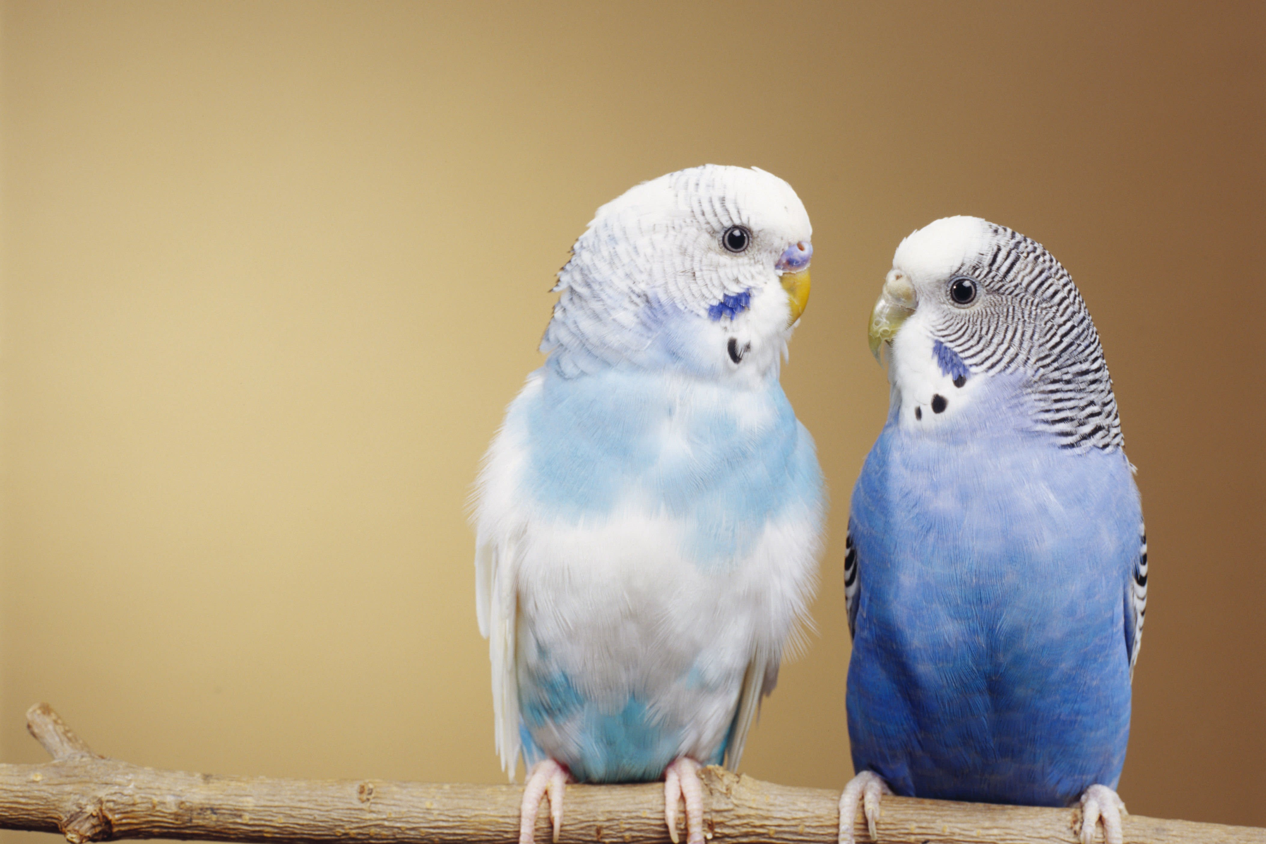 8 Types Of Pet Birds Your Family Will Love