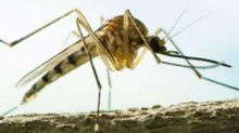 A Scary New Reason to Avoid Mosquitoes This Summer