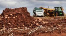 P.E.I. farmers come together amid tough potato harvest