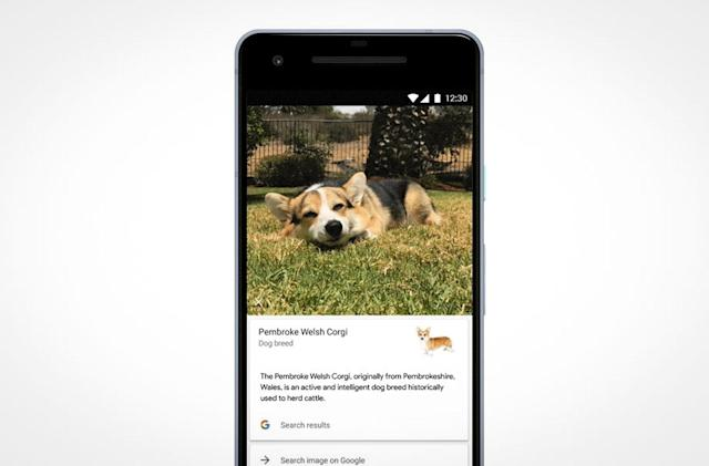 Google Lens can identify dog and cat breeds