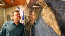 Celebrating 25 years of fossil finds in Fort McMurray's oilsands mines