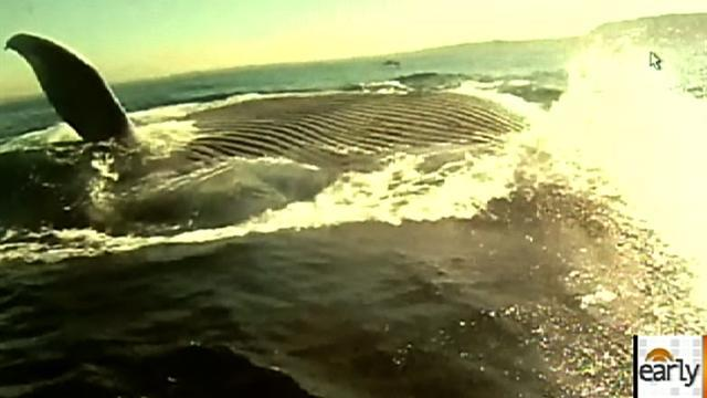 Kayakers get close-up look at blue whale