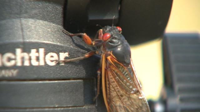 The Year of the Cicada