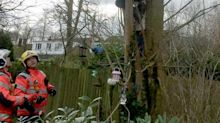 Would-be kitten rescuer has to be saved by firefighters after getting stuck in tree - six feet off the ground