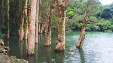 【雨季限定】城門水塘 水浸白千層