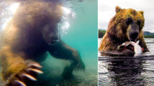 Watch: Incredible underwater footage shows huge brown bear catching salmon for his dinner