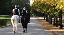 Hold your horses: The obscure road rule which could land you on-the-spot fine