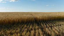 Brasil compra mais 30,8 mil t de trigo HRW dos EUA; total no ano já supera 600 mil