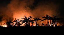 WWF advierte que incendios forestales de 2020 podrían ser peores que en 2019