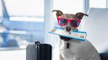 Alles, was man bei Reisen mit Tieren beachten muss