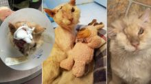 Cat Found With Acid Burns on Face Finds Home: 'Half of His Face was Melted'
