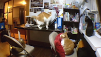 Taiwanese Cats Are Excited for Food